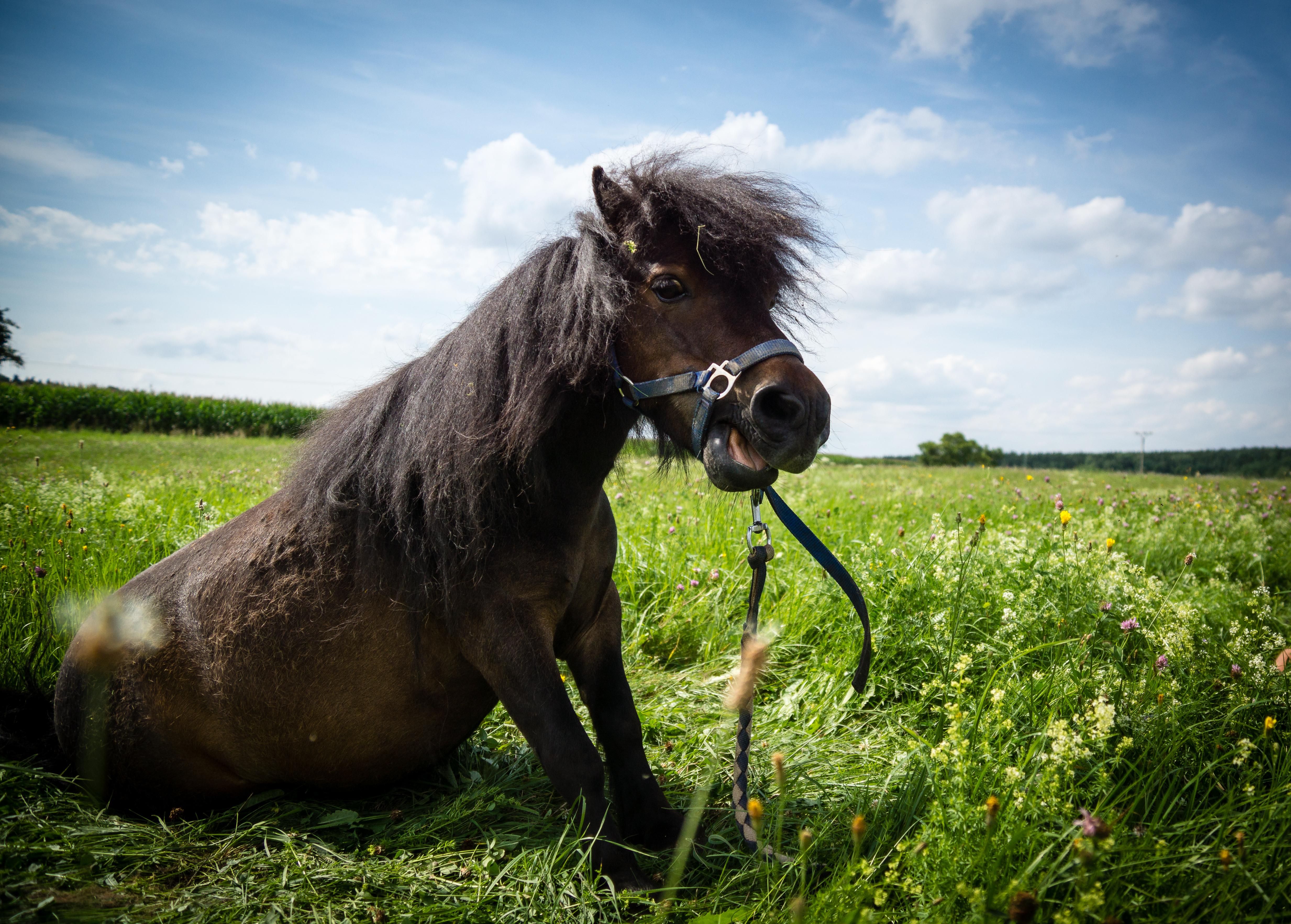 pony (3)